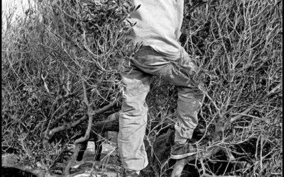 43. Olive Harvesting - Sikinos 2002